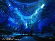 网友晒出华为P20水底世界摄影样张,照片素质超强