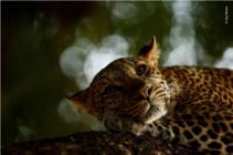 华为P30 Pro捕捉的精彩动物世界