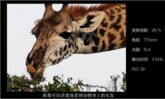 江小爬与非洲雄狮零距离 全靠一台华为P30 Pro