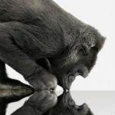 康宁Gorilla Glass 3将亮相CES 提升3倍强度
