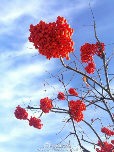 壁纸 枫叶 红枫 花 树